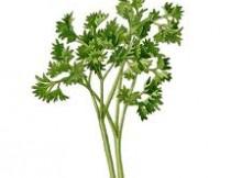 petražolės