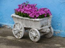 violetines geles dekoratyvinis sodinimas