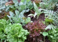 daržovių auginimas po plėvele