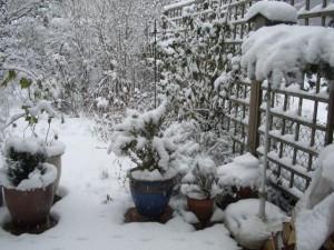 sodas žiemą