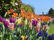 flowers-geles-krumai-tvora