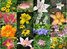 gėlių tręšimas