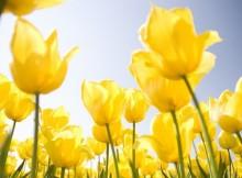 gėlių žydėjimas
