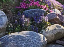 gėlės alpinariumams