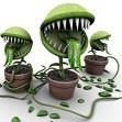 Pavojingiausi kambariniai augalai kurie gali kelti pavojų jūsų sveikatai?