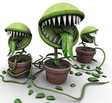 Pavojingi kambariniai augalai