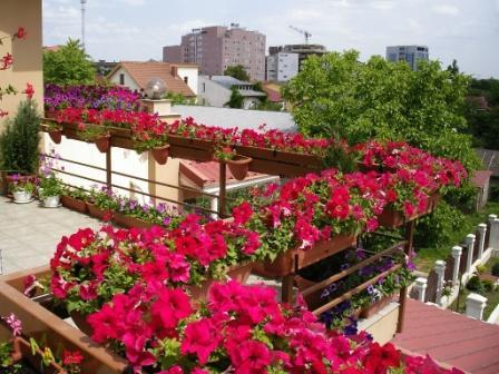 geles balkonuose