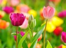 Gėlės interjere – interjerų charakteristika