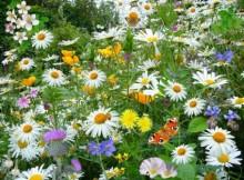 Vazoninių gėlių virusinės ligos
